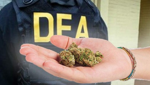 New DEA Chief Opposed to Rescheduling Marijuana