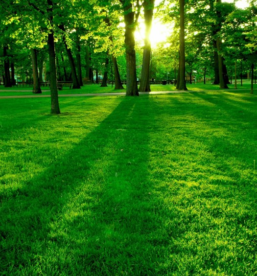 awesome-fully-natural-green-place-beautiful-hd-wallpapers