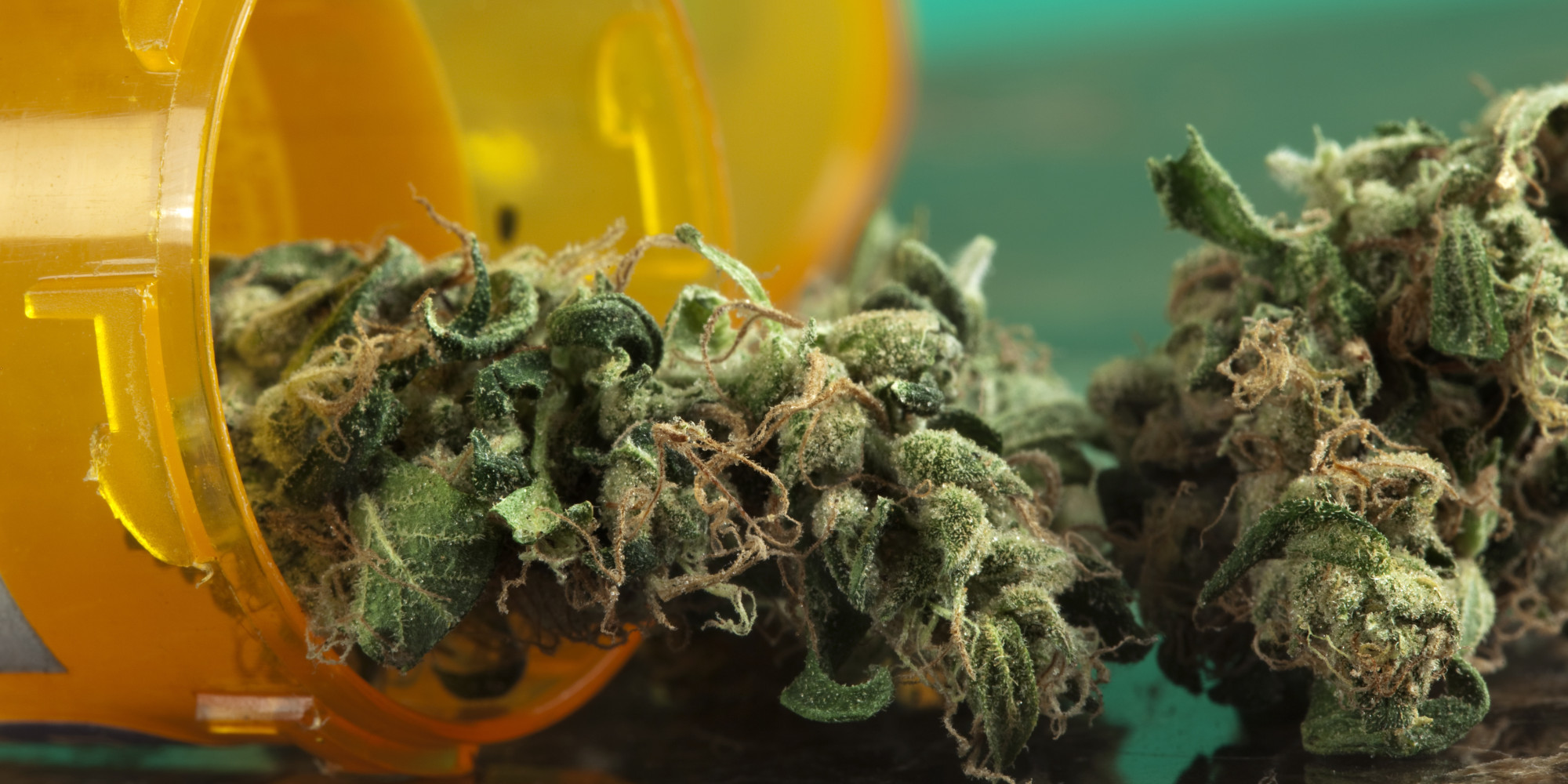 the many medicinal purposes of marijuana Because it's a fast-growing plant that's easy to cultivate and has many uses,  became the first state to legalize marijuana for medicinal use by people with severe or chronic illnesses.